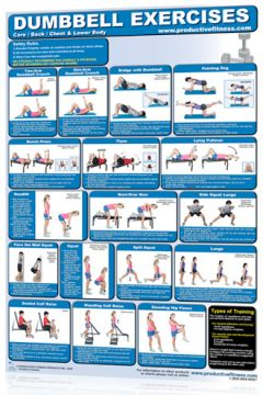 Poster DB Exercises Lower Body/Chest/Back